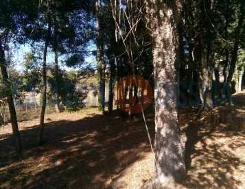 Terreno Rústico em Albergaria-a-Velha